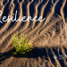 """""""Resilience is all about how you Recharge, not how you Endure""""*"""